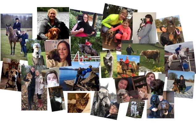 Vetoquinol UK Team - Passionate about Pet